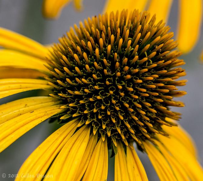 Fowers, July 15 2012, flower garden