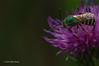 Backyard Critters, Aug 7 2013,#4084, Canon 6D-1/1600-F7.1-ISO500-LR5