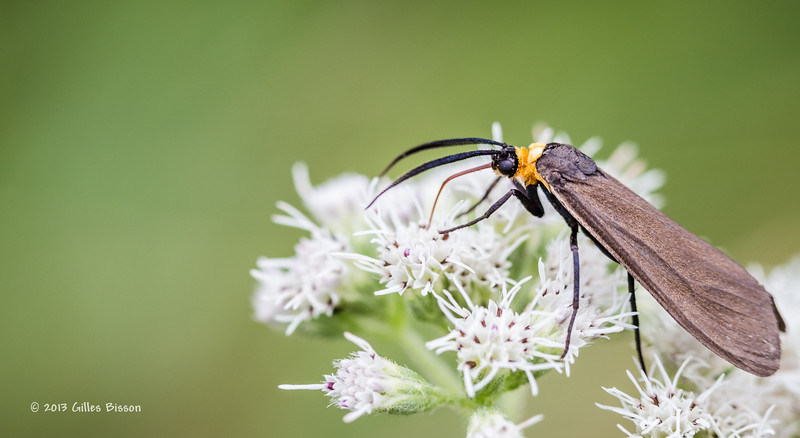 Backyard Critters, Aug 22 2013,#5390, Canon 6D-100mm macro-extension tubles-1/200-F5.0-1-ISO320-LR5