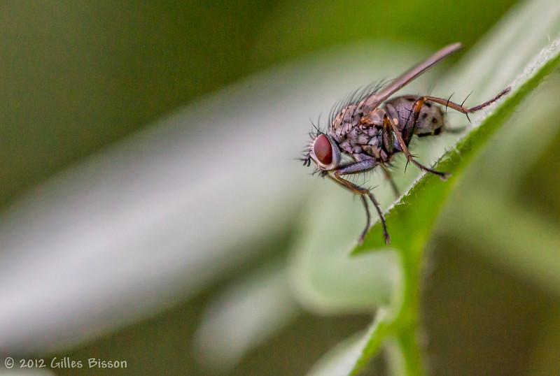 Fly, August 15 2012, Belleville