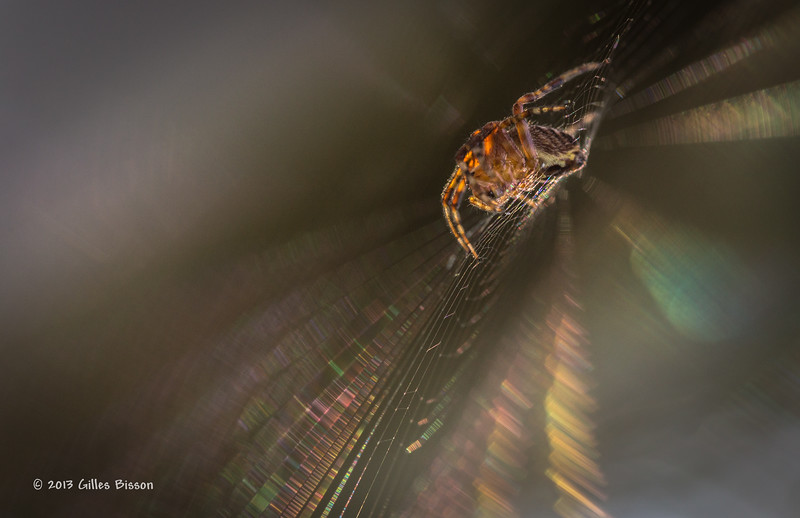 Spider Web, Aug 19 2013, #5260, Canon 6D-100mm Macro-1/250-F5.6-ISO500-LR5