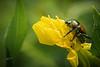 Bsckyard bug, Aug 8, 2021, sony A7RIV, 90mm macro, 1/200, F14, ISO 800