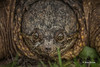 Snapping Turtle, June 09 2014, Canon T3i,100-400mm, 1/13.F8, ISO100