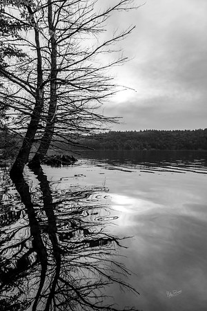 Black and White scenery, Bob Echo Provincial, August 3, 2018, Canon 6D, 24-105 mm, 1/160, F10, ISO 400