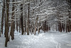 Snowy trail, Frink Centre Conservation Area, February 08, 2018, Canon 6D, 35mm, 1.3 Sec, F13, ISO 50