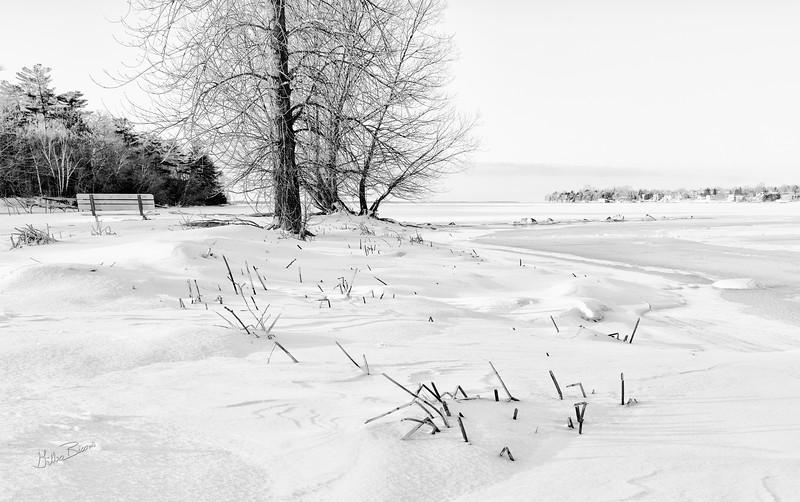 Lemoine Point Conservation Area, Kingston, February 7, 2020, Sony A7R4, 24-105mm, 1/30s, F16.0, ISO 64