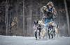 Marmora Sled Dog Races, January 31,2015, Marmora, Canon 7D mark2, 100-400 mm, 1/1250,F8.0,ISO 1000