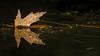 Moira River, September 23, 2020, Sony AR7IV, 100-400mm, 1/200, F14.0, ISO 100