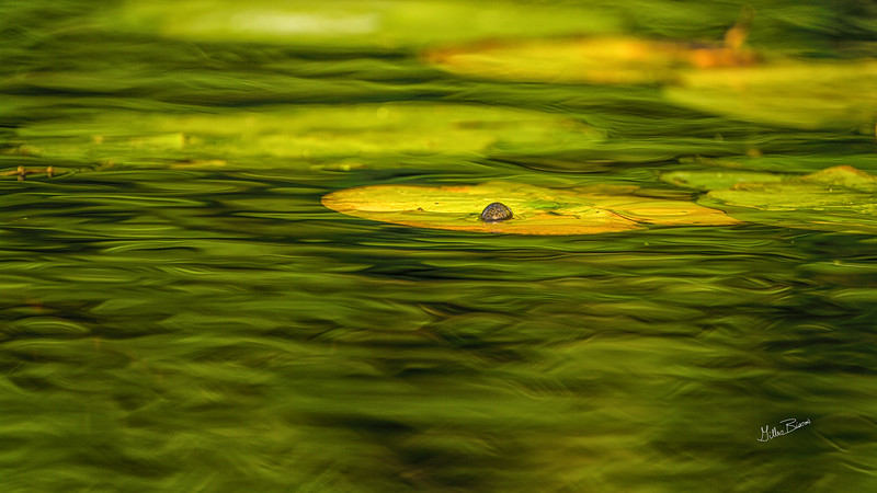 Moira River, September 23, 2020, Sony AR7IV, 100-400mm, 1/500, F8.0, ISO 320