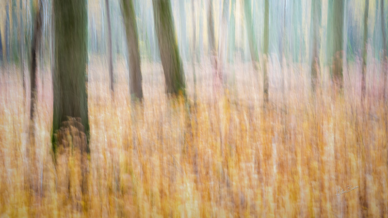 "ICM ""Intentional Camera Movement"" Fall landscape, Presqu'ile Provincial Park, October 23, 2020, Sony A7RIV, 24-105mm, .8 sec, F11, ISO 640"