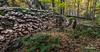 Landscape, Presqu'ile Provincial Park, October 27,2015, Canon 6D, 5.0 sec, F22.0, ISO50