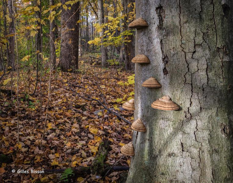 Landscape, Presqu'ile Provincial Park, October 27,2015, Canon 6D, 2.5sec, F18.0, ISO50