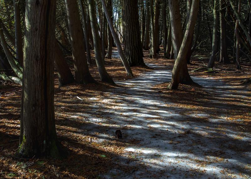 Marsh Boarwalk trail, Presqu'ile Provincial Park, March 22, 2018, Canon 6D, 24-105mm, 1.3 sec, F16, ISO 50
