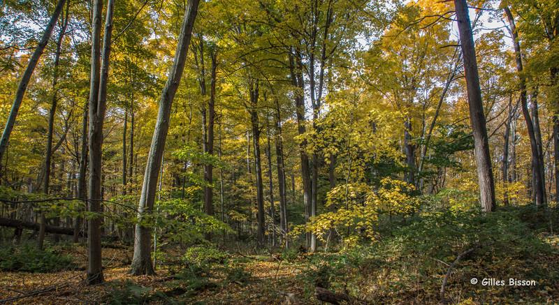 Landscape, Presqu'ile Provincial Park, October 27,2015, Canon 6D, 1.6 sec, F18.0, ISO50