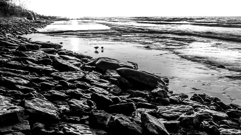 Black and white landscape with shore birds, Presqu'ile Provincial Park, October 19, 2018, Canon 7D Mark II, 20mm, 1/5 sec, F16, ISO 100
