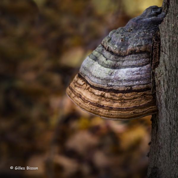 Landscape, Presqu'ile Provincial Park, October 27,2015, Canon 6D, 1/4 sec, F8.0, ISO50