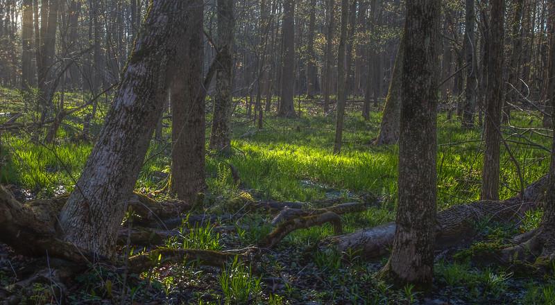 Presqu'ile Provincial Park, May 14, 2018, Canon 6D MarkII, 24-105mm, .4 sec, F16, ISO 50