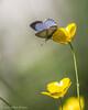 Butterfly, June 05 2012, Presqui'ile Provincial Park