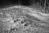 Black & White Sand Dunes at Sandbanks Provincial Park, January 15, 2017, Canon 6D, 24mm, 1/13 sec, F16, ISO 50