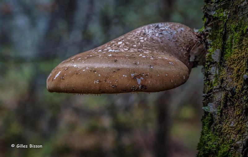 Mushroom, Vanderwater Conservation Area, November 14, 2015, Canon 6D, 24-105mm, .8sec, F9.0, ISO 50