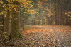 Vanderwater conservation area, October 18, 2020, Sony A7RIV, 24-105mm, 1.0 sec, F11, ISO 50