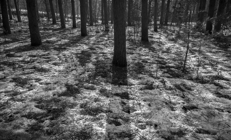Black and White trees and shadows, Vanderwater Conservation Area, January 16, 2017, Canon 6d, 24mm, 1/6 sec, F16, ISO 50