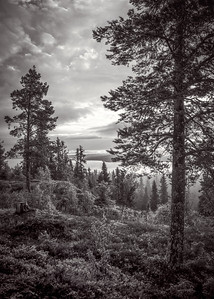 Black and white view from the top of Hoverberget mountain, Jamtland, Northern Sweden, July 29, 2017, Canon 6D, 1/160, F 11.0, ISO 400