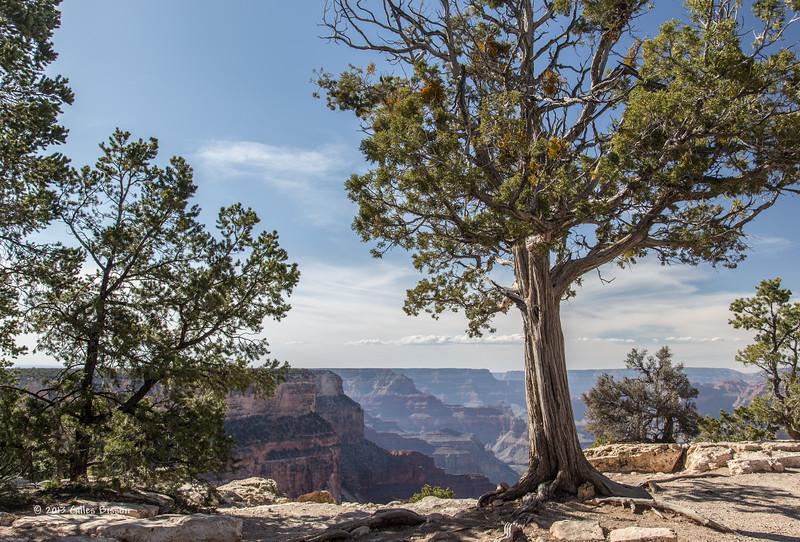 Grand Canyon, South Rim, Arizona, April 05 2013, #0991