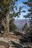 Grand Canyon, South Rim, Arizona, April 05 2013, #1224