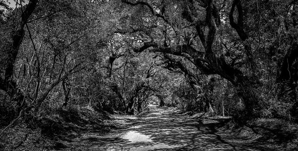 Botany Road