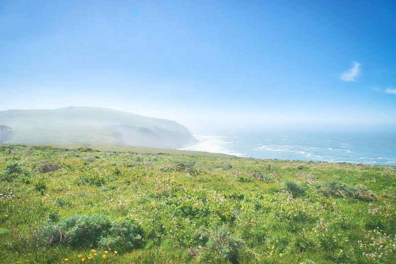The Point Reyes Shoreline seen from Tomales Point