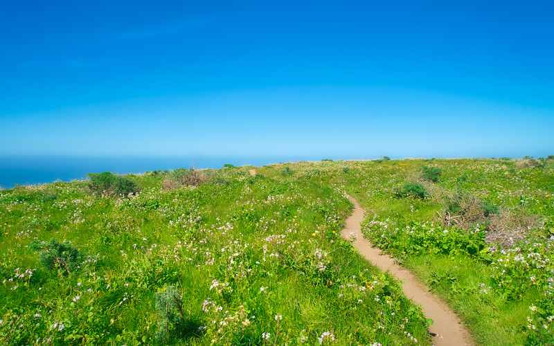 Spring flowers along the Tomales Point Trail