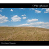 """Prairie view at The Wilds:  <a href=""""http://www.thewilds.org"""">http://www.thewilds.org</a>"""