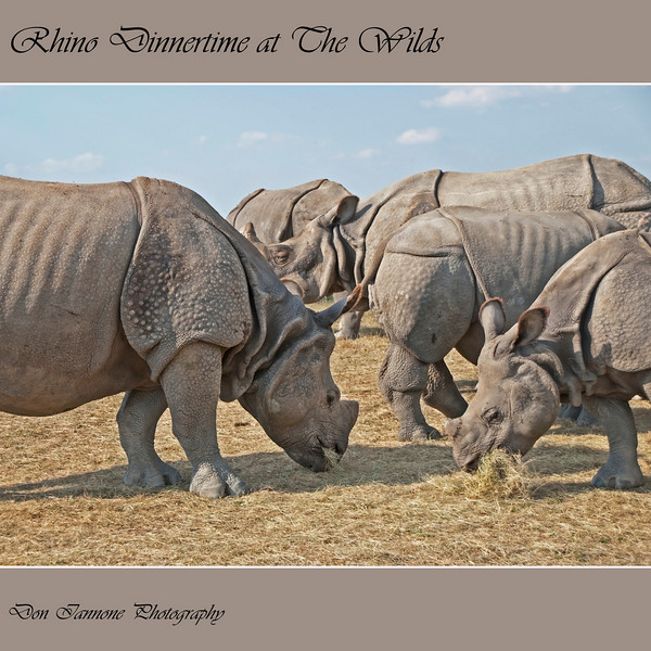 "Feeding Rhinos at The Wilds:  <a href=""http://www.thewilds.org"">http://www.thewilds.org</a>"