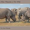 """Feeding Rhinos at The Wilds:  <a href=""""http://www.thewilds.org"""">http://www.thewilds.org</a>"""