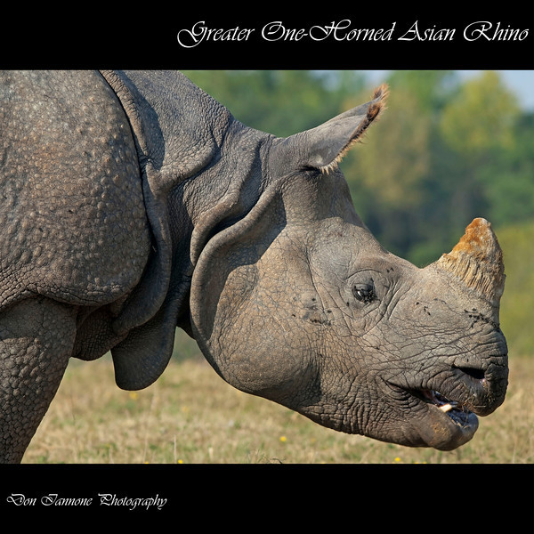"Black rhino at The Wilds:  <a href=""http://www.thewilds.org"">http://www.thewilds.org</a>"