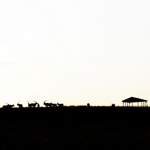 """Evening silhouette at The Wilds:  <a href=""""http://www.thewilds.org"""">http://www.thewilds.org</a>"""