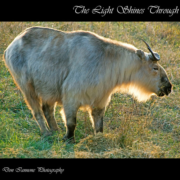 """Touched by light at The Wilds:  <a href=""""http://www.thewilds.org"""">http://www.thewilds.org</a>"""