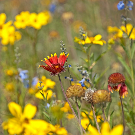"Wildflowers at The Wilds: <a href=""http://www.thewilds.org"">http://www.thewilds.org</a>"