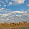 "Prairie view Foggy sunrise at The Wilds:  <a href=""http://www.thewilds.org"">http://www.thewilds.org</a>"