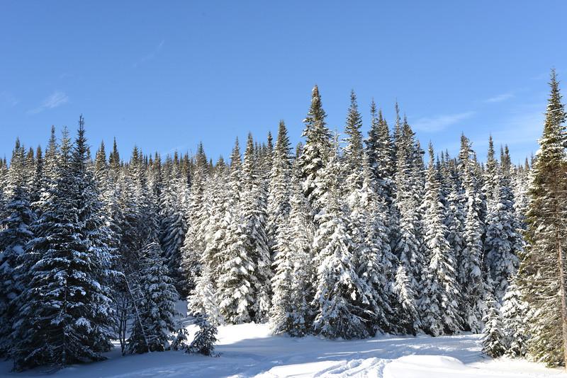 Quebec Province - Christmas 2012 46.jpg
