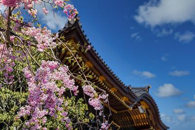 Narita Blossoms