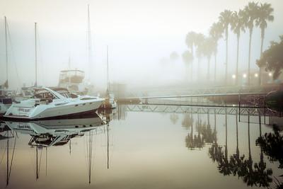 Foggy Palms