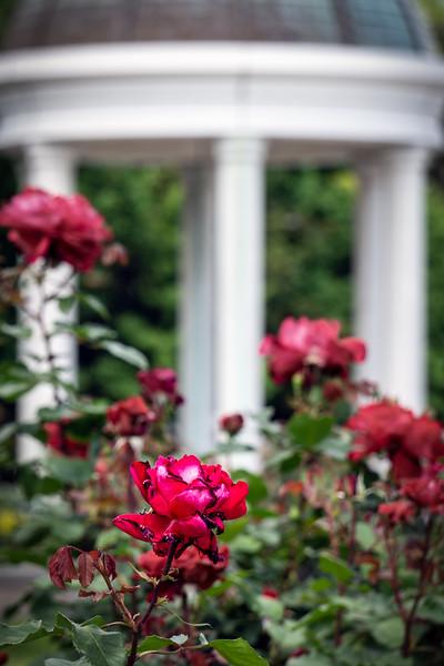 VP Garden 2