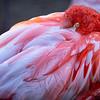 Flamingo 8