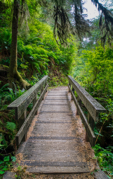 The trail from Cape Perpetua Campground to the Visitor Center.