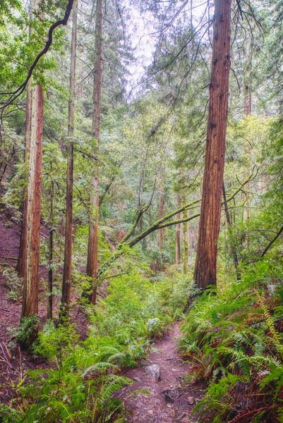 Descending the Ben Johnson Trail