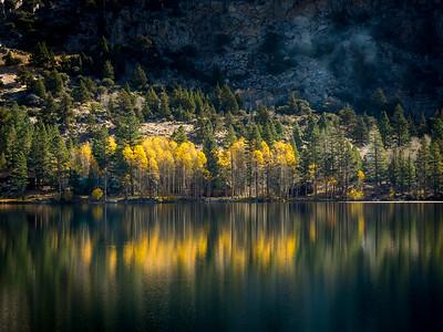 Batched Aspens, June Lake Loop, Eastern Sierra
