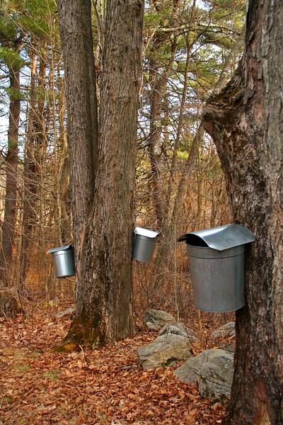 SC 324 Three Sap Buckets