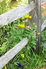 SC 17 Fence with Wild Flowers